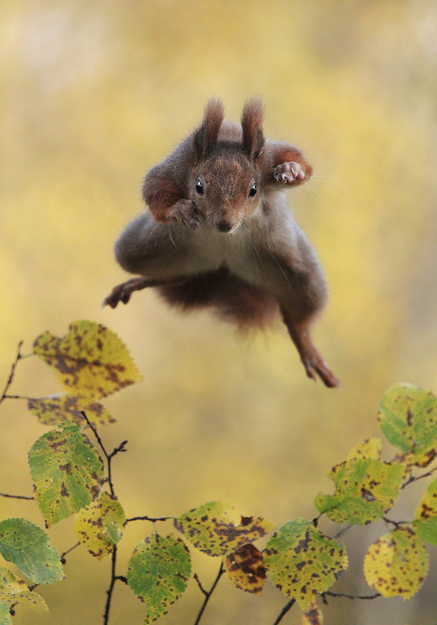 Julian Rad / The Comedy Wildlife Photography Awards