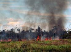 ONG italiana pede a governo do Brasil provas de que país defende meio ambiente e Amazônia