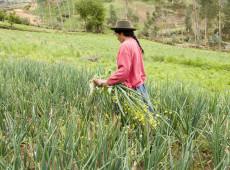 FAO: 40% das agricultoras na América Latina e Caribe não recebem pagamento