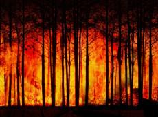 Incêndio na Espanha destrói milhares de hectares de floresta