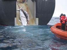 Japão retoma caça de baleias para consumo e gera polêmica