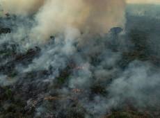 Biodiversidade perdida em queimadas na Amazônia vai levar décadas para se recuperar