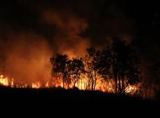 Rede criminosa está ligada aos incêndios na Amazônia, diz ONG