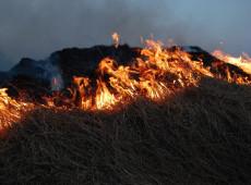 Indonésia anuncia prisão de mais de 200 pessoas responsáveis por incêndios florestais