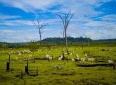 Criação de gado cresce 85% na maior área protegida de floresta tropical do mundo