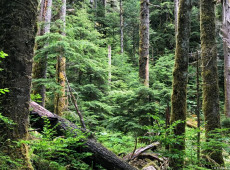 Alemanha vai destinar € 547 milhões para recuperar florestas