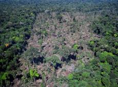 Imazon: desmatamento na Amazônia aumentou 15% em 12 meses