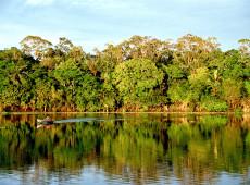 Analista questiona na Foreign Policy se invasão militar é solução para desmatamento na Amazônia