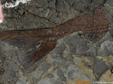 Fósseis retratam dia em que asteroide matou os dinossauros