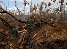 ONG liga empresas da Europa e EUA a desmatamento na Amazônia