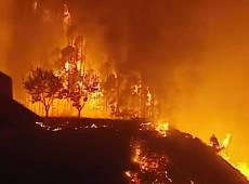 Incêndios destroem milhares de hectares de plantações durante onda de calor na França