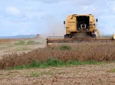 Relatório de ONG denuncia impacto negativo da soja produzida na América do Sul