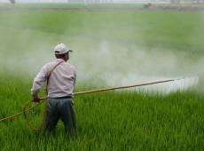 Venda de agrotóxicos altamente perigosos é mais intensa em países pobres, diz estudo