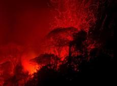 'Está queimando mais do que nunca', diz fotógrafo com mais de 50 viagens à Amazônia