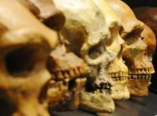 Identificado na Grécia o mais antigo Homo sapiens fora da África